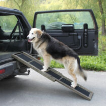 Kutya rámpa, fellépő